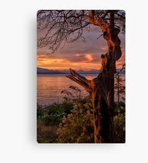 Gnarly Canvas Print