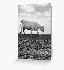 single cow feeding on the lush grass Greeting Card