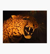 Sabre Toothed Tiger Photographic Print