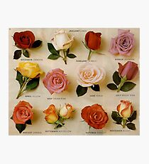 vintage roses card Photographic Print