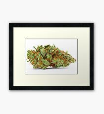 Space Queen Marijuana Framed Print