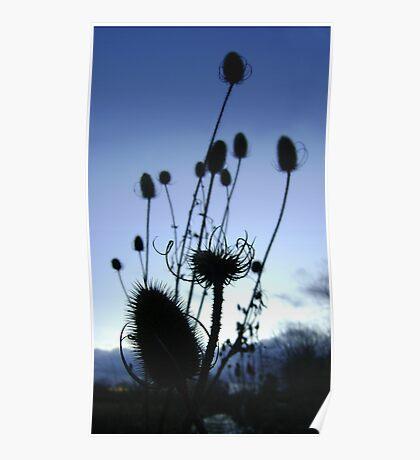 Teasels (Scottish streamside, November) Poster