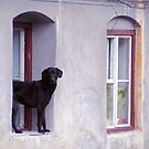 lucky shot 2 by Günter Maria  Knauth