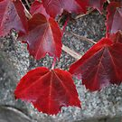 Autumn Ivy by Judi FitzPatrick