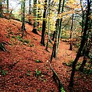 """Autumn Carpet"" by Bradley Shawn  Rabon"