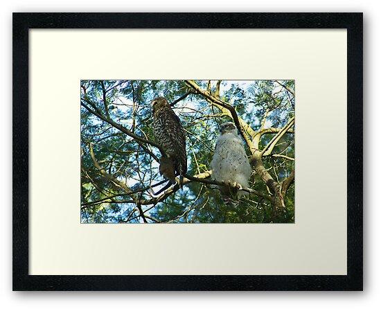 Powerful Owl Family 36 by Biggzie