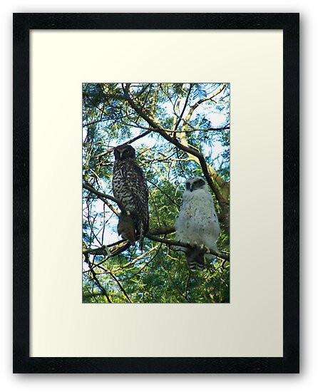 Powerful Owl Family 44 by Biggzie