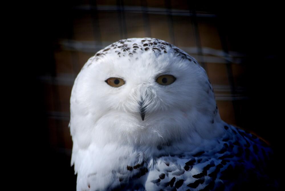Snowy Owl by KerryCash