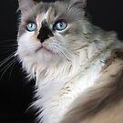 Blue Eyed Mia by Kimberly Palmer
