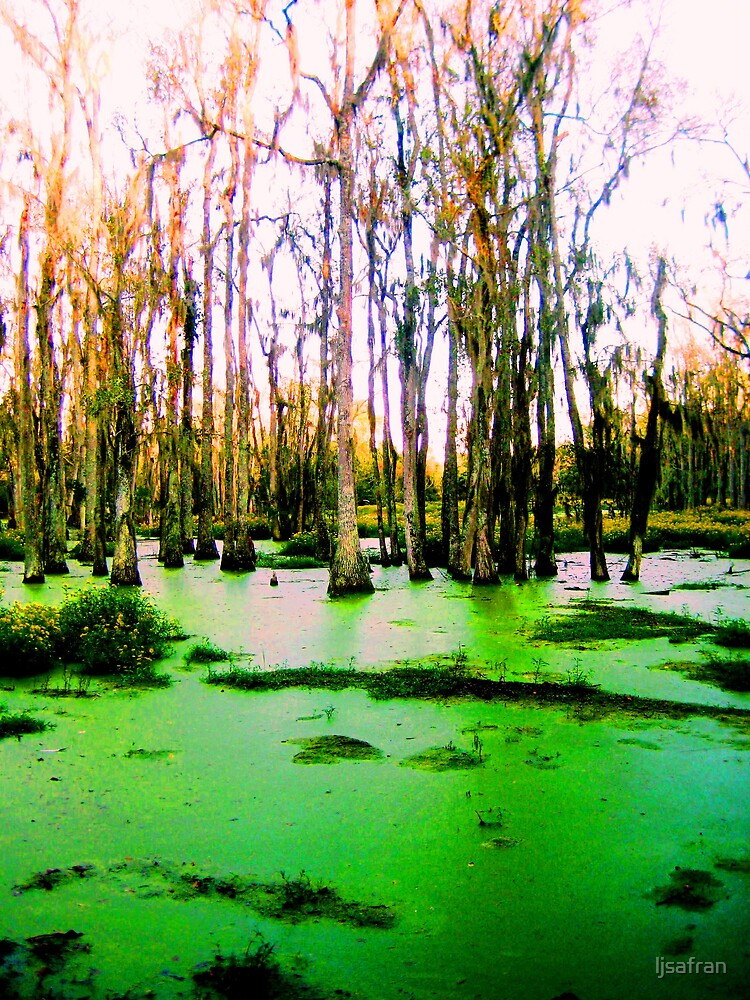 Swamp in Charleston, SCq by ljsafran