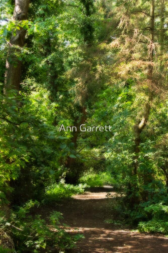 Autumn Path by Ann Garrett