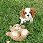 cavalier king charles spaniel puppy with toy by marasdaughter