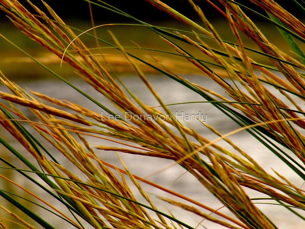 Salt Marsh Hay 2 by Lee Donavon Hardy