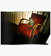 Cat in the Armchair Poster