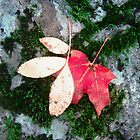 Two leaves on a mossy rock by Shulie1