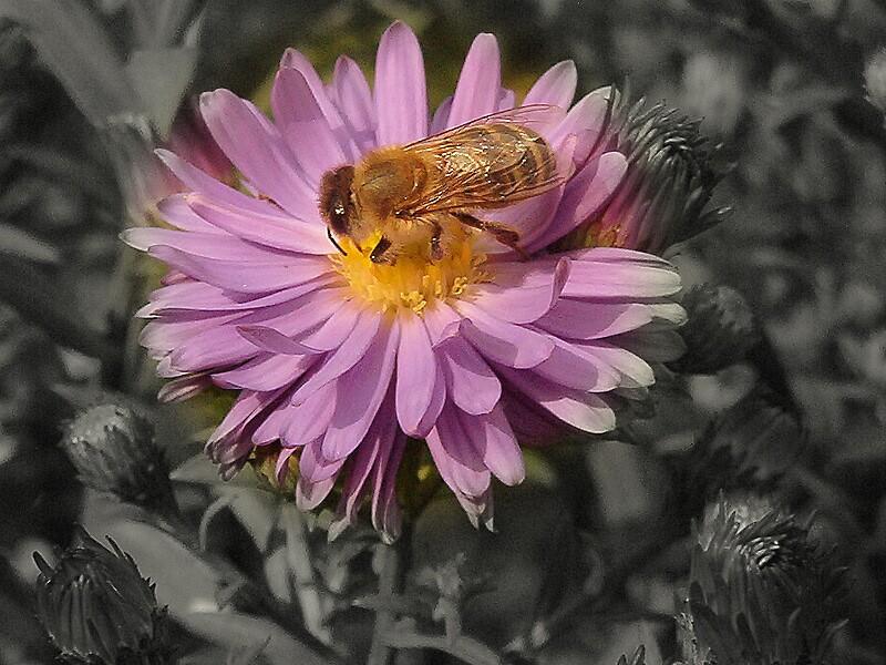 Flower by Alojzy