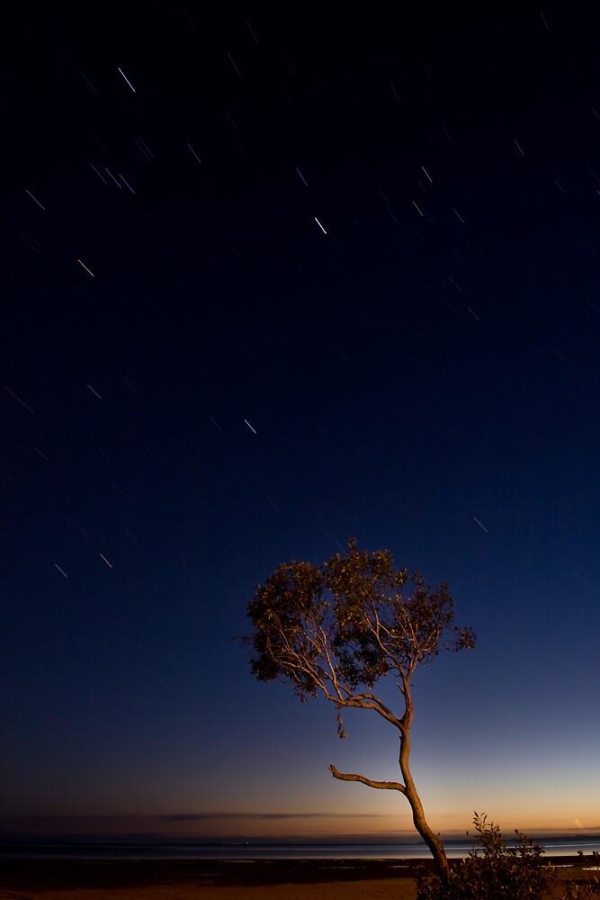 A Tree Full Of Secrets  by Lance Jackson