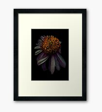 Nodding off Framed Print