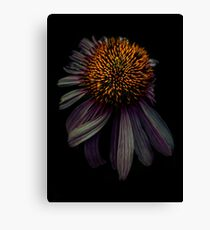 Nodding off Canvas Print