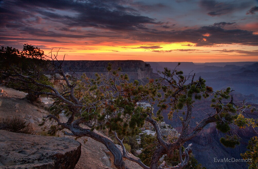 Tree at Sunset Grand Canyon by EvaMcDermott