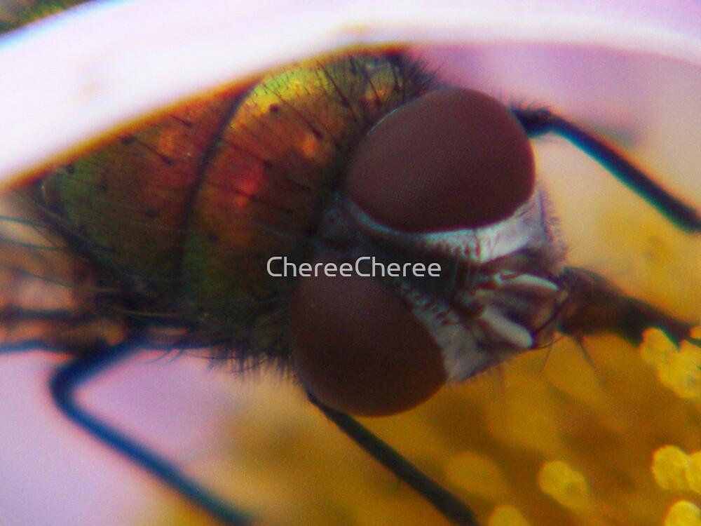 The Fly by ChereeCheree
