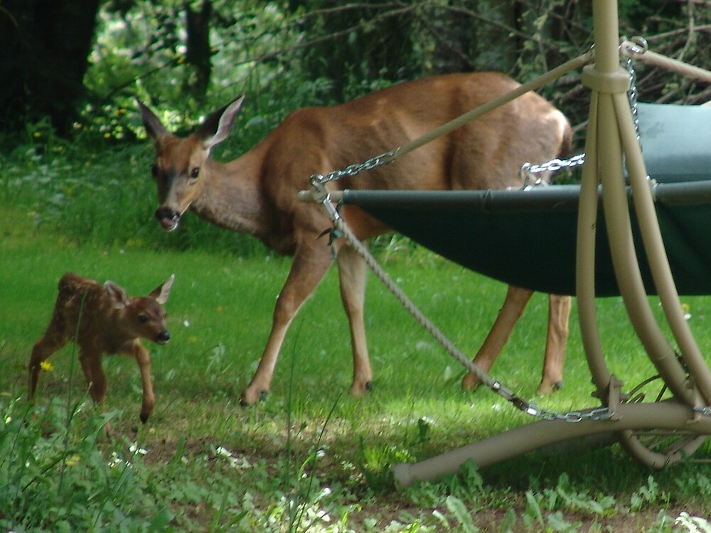 Mommy and Baby Deer by MsLiz