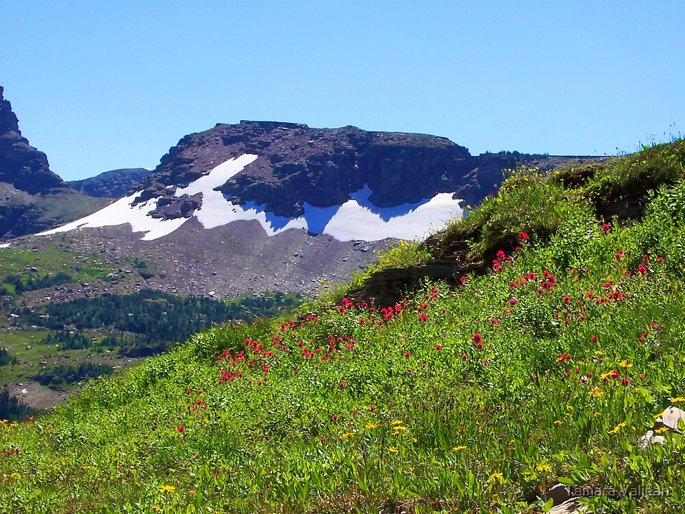 Glacier Wildflowers 2 by Tamara Valjean
