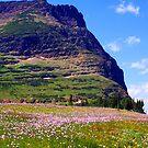 Glacier Wildflowers 6 by Tamara Valjean