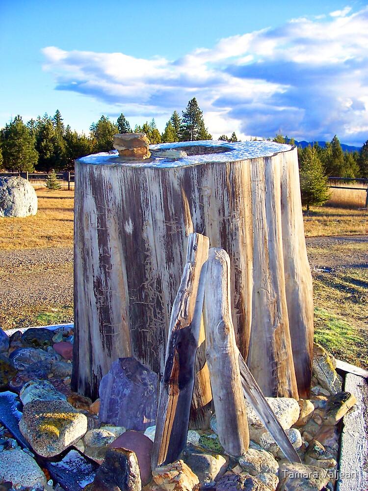 Frosted Stump by Tamara Valjean