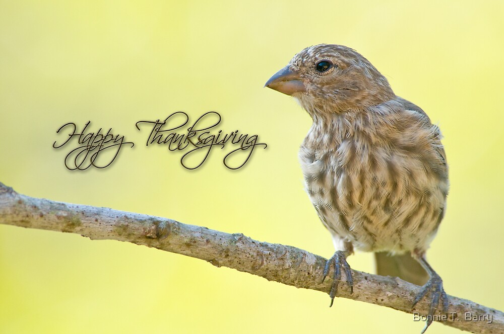 Happy Thanksgiving Finch by Bonnie T.  Barry