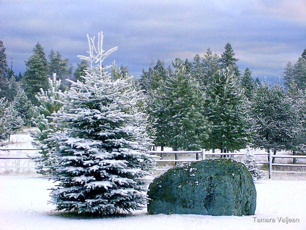 Snowy Idaho  by Tamara Valjean