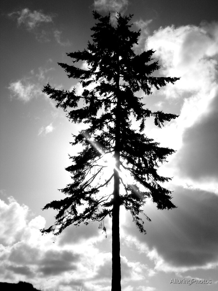 Stand Alone by AlluringPhotos