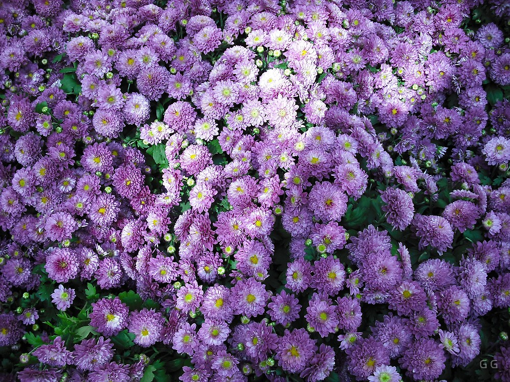 Purple Flowers by G G