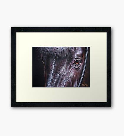 Black stallion Framed Print