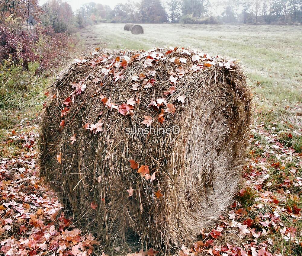 Autumn hay by sunshine0