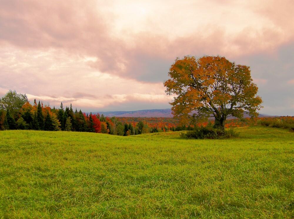 Autumn by marchello