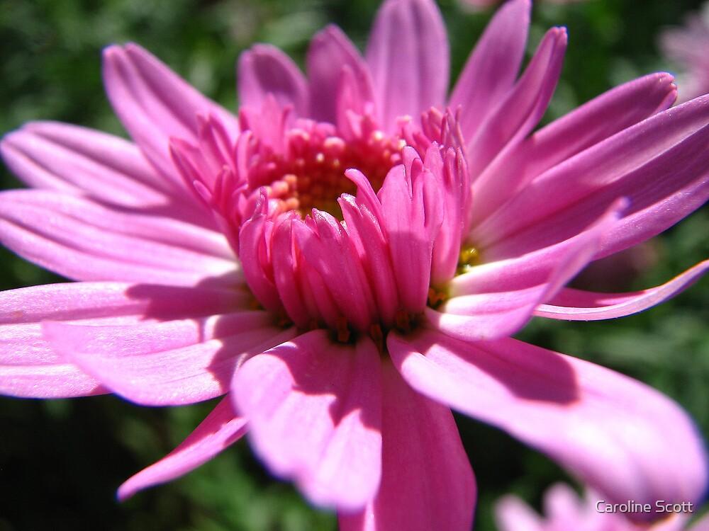 Pretty in Pink by Caroline Scott