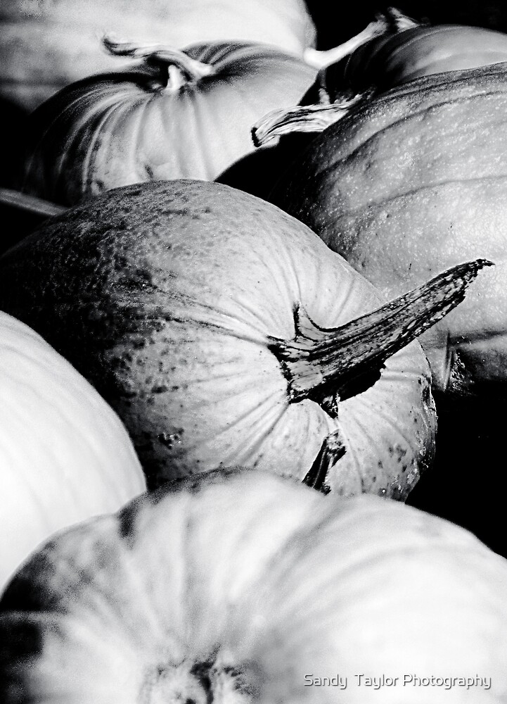 Glumpkins by Sandy  Taylor Photography
