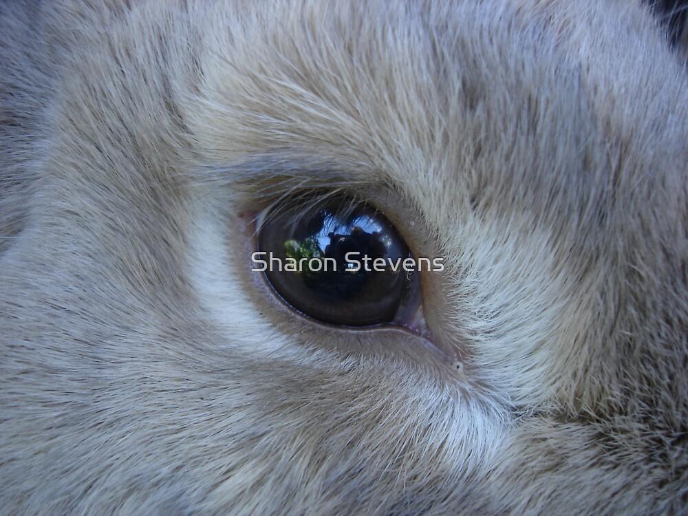 Rabbits Eye by Sharon Stevens