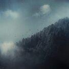 ashen forest by Dirk Wuestenhagen