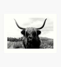 Scottish Highland Cattle - Black and White Animal Photography Art Print