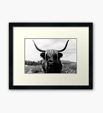 Scottish Highland Cattle - Black and White Animal Photography Framed Print