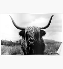 Scottish Highland Cattle - Black and White Animal Photography Poster