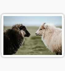 Sheeply in Love in Iceland - Animal Photography Sticker