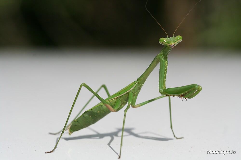Preying Mantis I by MoonlightJo