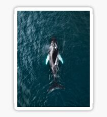 Humpback Whale in Iceland - Wildlife Photography Sticker