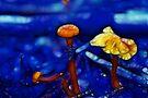 mushrooms fantasy by Aimelle
