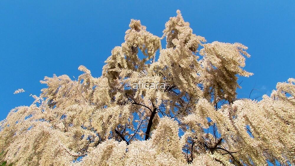 flowering tree by alicara