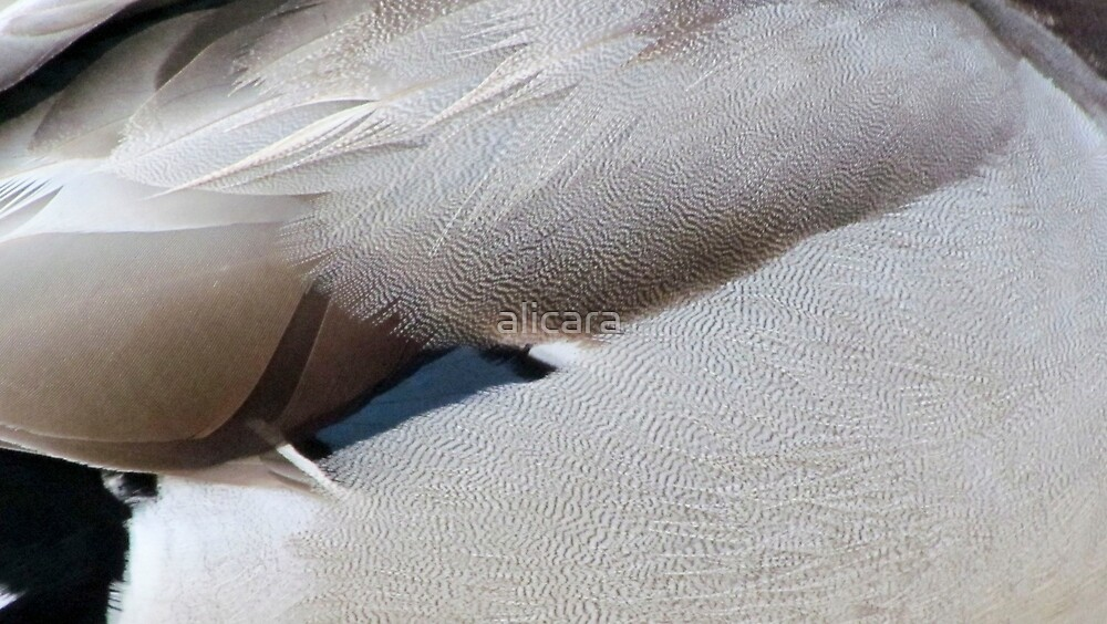 texture feathers by alicara