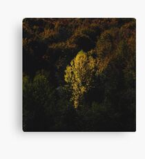 Yellow tree standing out from the crowd Canvas Print